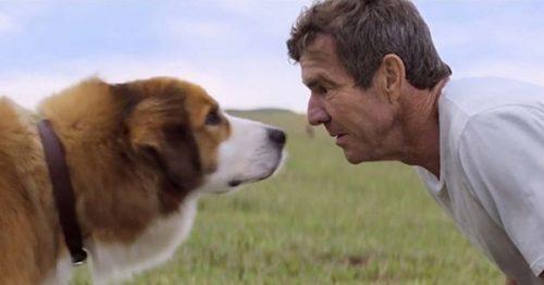 a-dog-purpose